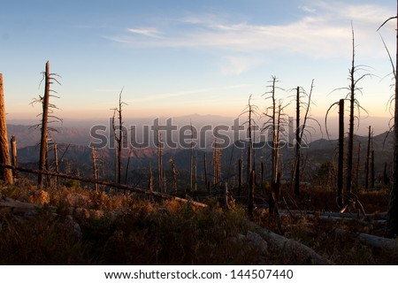 Fire Damage in the Mountains of Arizona. - stock photo