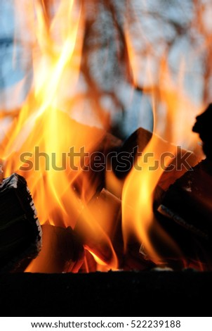 Fire flames background.Wood in the fire