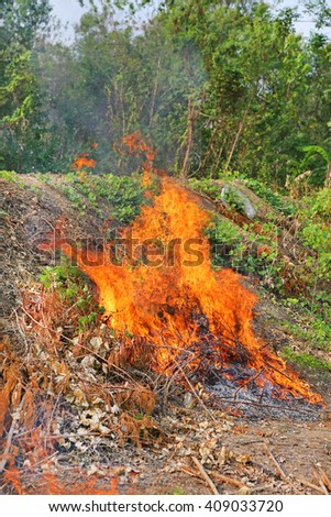 fire forest in summer - stock photo