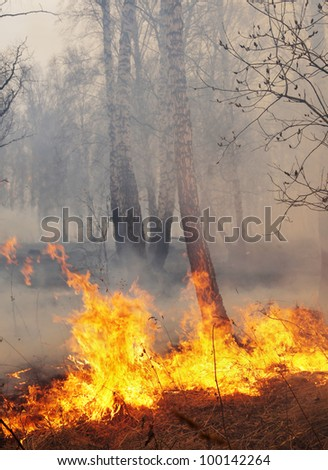 Fire in a forest