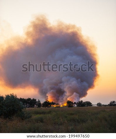 fire in a pine forest in the dry and hot weather, the summer season - stock photo
