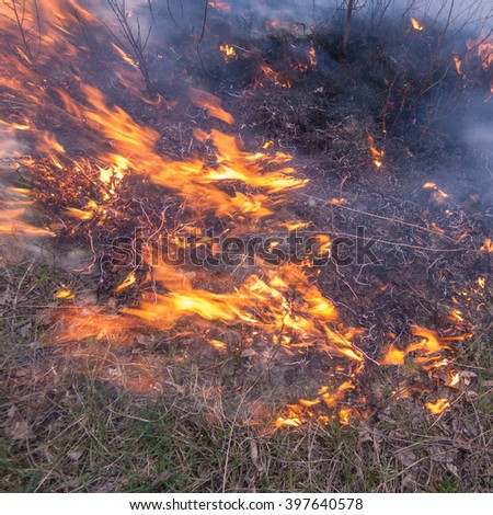 fire in the deciduous forest is burning dry grass