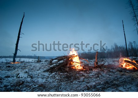 fire in the forrest