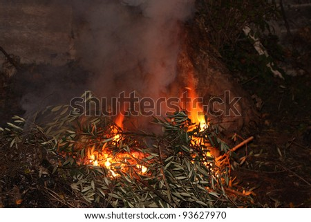 fire in the nature, nature destruction photo - stock photo