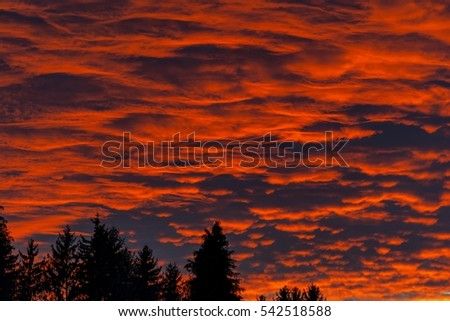 Fire in the sky over the forest. Background of the blood red evening sky and clouds. Sunset and cloudy sky with clouds  in different forms.