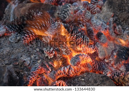 fire of spruce and pine cones close up - stock photo