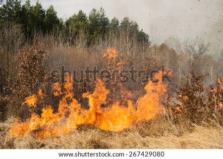 Fire on agricultural land near forest. Big flame and clouds of dark smoke - stock photo
