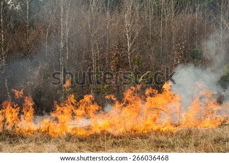 Fire on agricultural land near forest. Wildfire in progress - stock photo