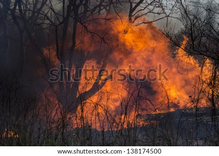 Fire on dry grass, trees and buildings inflated by a strong wind - stock photo