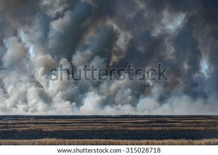 Fire on wheat field close up