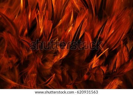 stock-photo-fire-red-feather-texture-ani