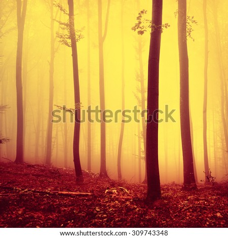 Fire red saturated autumn season foggy forest background. Over saturated yellow red forest trees background. - stock photo