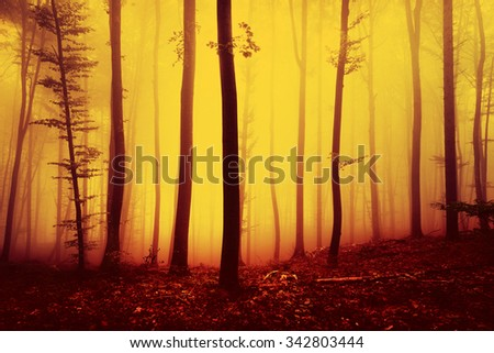 Fire red saturated autumn season foggy forest landscape background. Over saturated yellow red forest trees background. - stock photo