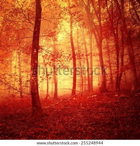 Fire red saturated mystic forest light scene background. - stock photo