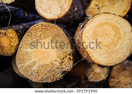 Fire wood logs. Home living, energy for winter. - stock photo