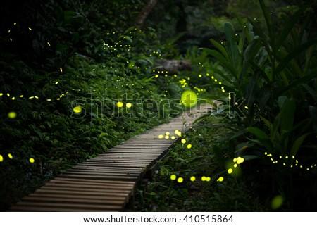 fireflies in the bush at night in taiwan - stock photo