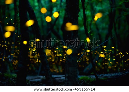 Fireflies in the summer at forest near Burgas city, Bulgaria - stock photo