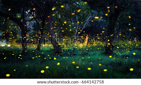 Fireflies In The Bush At Night Prachinburi Thailand
