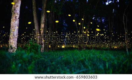 Firefly Stock Images Royalty Free Images Amp Vectors
