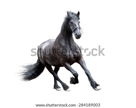 firesian horse running isolated on white