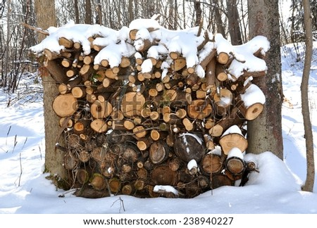 Firewood covered with snow