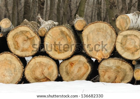 firewood in the forest. sawn wood. - stock photo