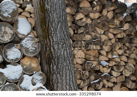 firewood stacked next to a tree