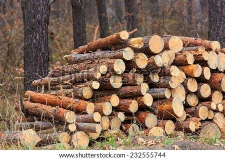 Firewood store in pine forest - stock photo
