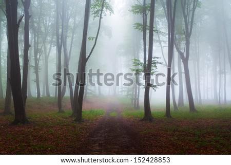 First autumn days in the forest during a foggy day
