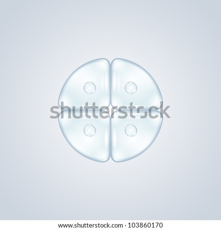 first cell division after fertilization - stock photo