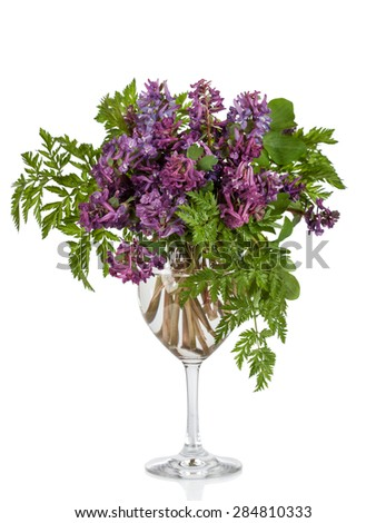 First forest springs flowers in vase,  isolated on white background