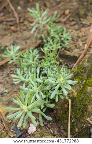First frost and froze,mildew (mae khaning) for Highest point of Doi Inthanon - stock photo