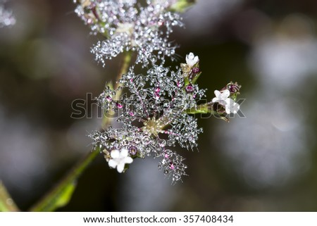 First frost and froze,mildew (mae khaning) for Highest point of Doi Inthanon, Chiang Mai, Thailand - stock photo