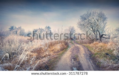 First frost in the forest. Misty december morning. - stock photo