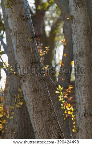 First green on the trees; Signs of spring in the forest; First tender leaves on the trees - stock photo