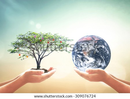 First, human hands holding fruitful medium plant or big tree. Second, human hands holding planet over blurred nature background. World Food Day concept. Elements of this image furnished by NASA. - stock photo