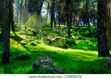 First rays of light in the dark forest - stock photo