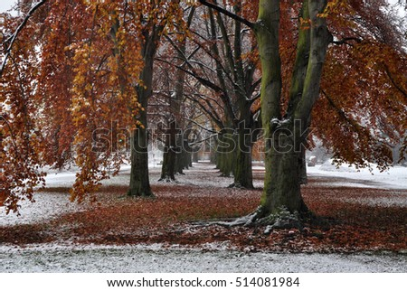 First snow in november autumn park in northern poland