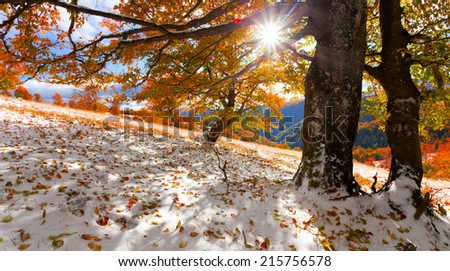 First snow in the autumn forest - stock photo