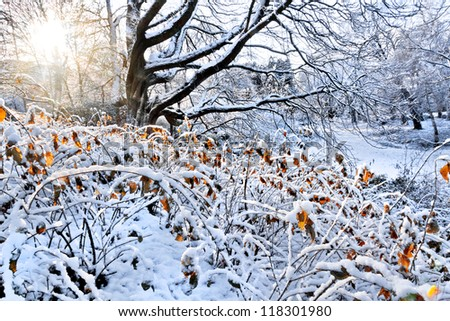 First snow in the park. Winter landscape. - stock photo