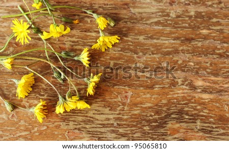 first spring flowers on wooden background - stock photo