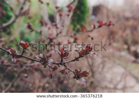 first spring green sprouts on tree branches close up. Environment and nature care concept. Seasons changing.  - stock photo