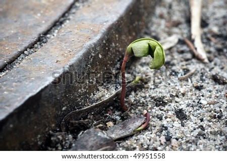 first spring sprout on some soil by the road