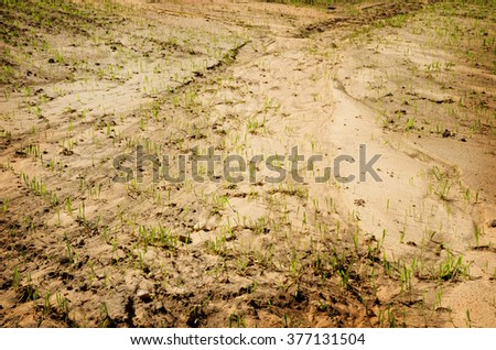 first sprouts on the field in spring - stock photo