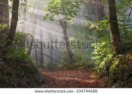 First sunbeams in the forest of La Fageda de Jorda in Garrotxa, Girona, Catalonia. - stock photo