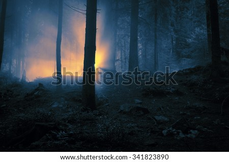 First sunlight through the fog in a dark forest. - stock photo