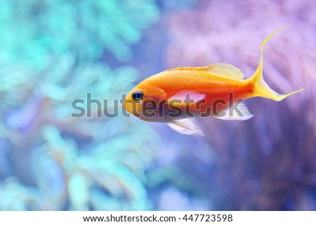 Fisch - stock photo
