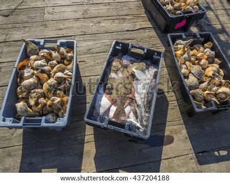 Fish and conch shells just harvested and going to fish market - stock photo