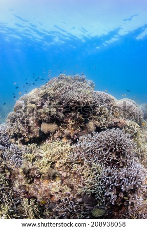Fish around a healthy, shallow tropical coral reef - stock photo