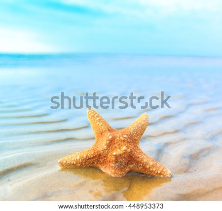 Fish Beach Star